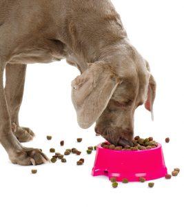 Dog with dog food isolated on white background